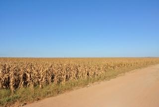 2013年のブラジルのトウモロコシ現地事情速報1 -マットグロッソ州を ...