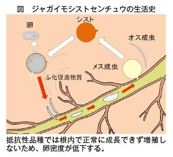 北海道におけるジャガイモシスト...