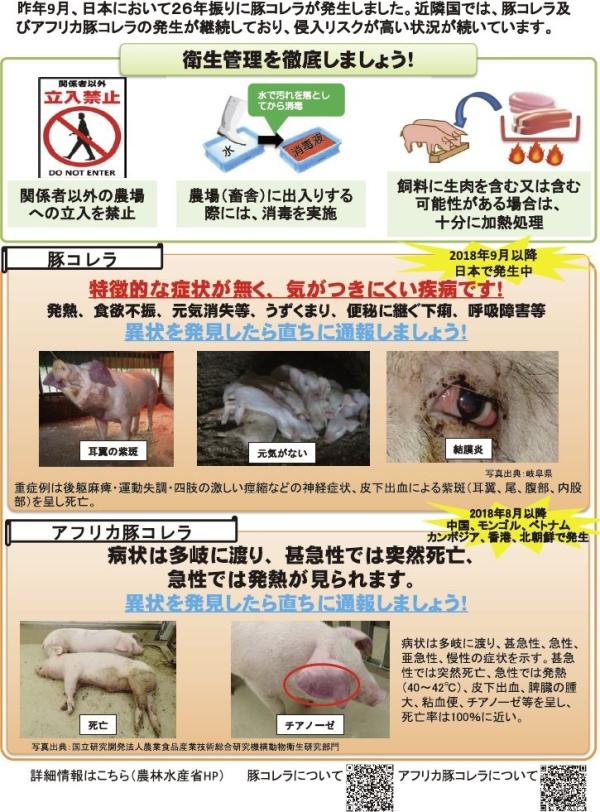 豚 コレラ アフリカ 豚 コレラ 違い